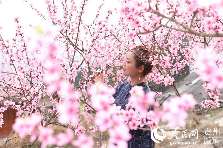 风景桃花纷飞图片